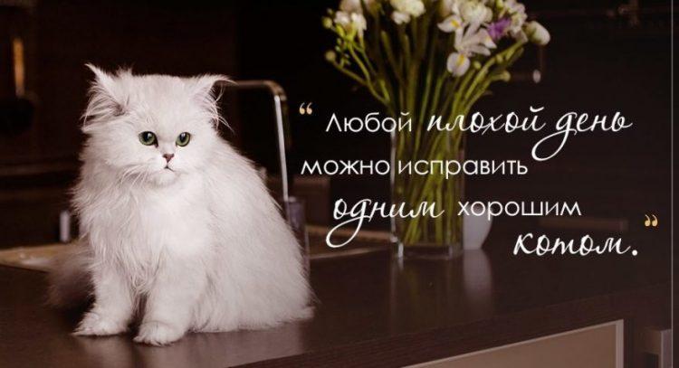 Картинки с цитатами о котах