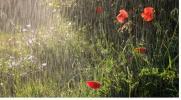 Земля вздыхала глубоко, с дождем сливаясь...