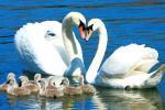 сохрани любовь