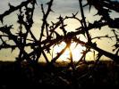 Фотоальбом «Природа»