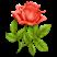 Роза Подарок от автора Иллария