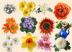 Море цветов Подарок от автора Эмине
