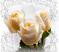 Розы Подарок от автора acrobat