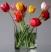 Тюльпаны Подарок от автора Татьяна Белонина