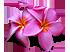 Цветок признания таланта Подарок от автора Scruffy Spirit