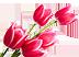 Тюльпаны в благодарность Подарок от автора Татьяна Лаин