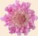 Розовый цветок Подарок от автора Сексанет