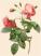 Роза Подарок от автора eji