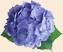 Клубочек синевы Подарок от автора Светлана Дон-Ская