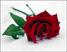 Роза Подарок от автора Volik