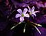 Лиловые цветы Подарок от автора Ирина Луцкая